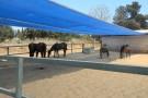 רשת צל בחוות סוסים